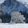 Half Dome In Winter by Christine Jepsen