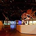 Hall Of Paleontology by Tim Stanley