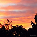 #halloween #morning #sky Is On #fire by Austin Tuxedo Cat