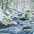 Hamburg Mountain Stream by Constance Drescher