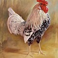 Hamburg Rooster by Hans Droog