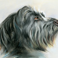 Hamish The Wolfhound by MM Anderson