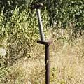 Hammer by Sara Stevenson