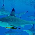 Hammerhead Sharks by Corey Ford