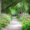 Hampton Park Path by Joshua Corrigan