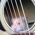 Hamster Strings by Sam Klingensmith