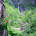 Hanakapiai Valley by Kevin Smith