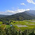 Hanalei River Overlook In Kauai by Catherine Sherman