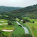 Hanalei Taro Fields by Michael Peychich