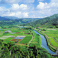 Hanalei Valley Taro Field by Greg Vaughn - Printscapes