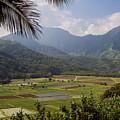 Hanalei Valley Taro Fields - Kauai by Yefim Bam