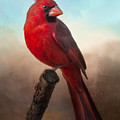 Handsome Cardinal by Barbara Manis