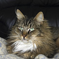 Handsome Cat by Sally Weigand