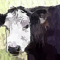 Handsome Heifer by Eleanor Abramson