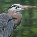 Handsome Heron by Jill Ciccone Pike