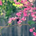 Hang On by Megan Dirsa-DuBois