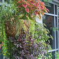 Hanging Baskets by Catherine Sprague