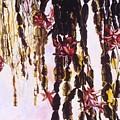 Hanging Garden by Caroline Doucette