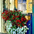 Hanging Gardens by Pennie  McCracken