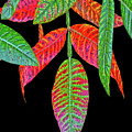 Hanging Green And Red Leafs... by Tom Hageman