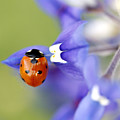 Hanging On A Petal by Danielle Miller
