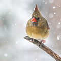 Hanging Out In The Snow by Sue Matsunaga
