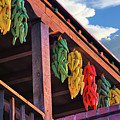 Hanging Peppers In Old Town Albuquerque New Mexico  by Gregory Ballos