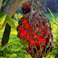 Hanging Red Bottle Garden Art by Ginger Wakem