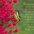 Happiness by Jemmy Archer