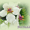 Happy Birthday - Floral - Moth Mullein by Mother Nature