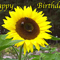 Happy Birthday - Greeting Card - Sunflower by Sascha Meyer