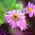 Happy Birthday Daisy by Beth Tidd