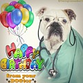 Happy Birthday From Your Dogtor by Kathy Tarochione