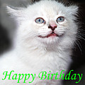 Happy Birthday Kitty by Bob Johnson