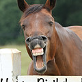 Happy Birthday Smiling Horse by Jt PhotoDesign