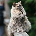 Happy Cat by Steve Seeger