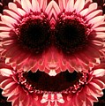 Happy Daisies Are Here Again by Max DeBeeson