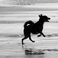 Happy Dog Black And White by Jill Reger