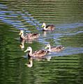 Happy Ducks On The Pond by Carol Groenen