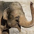 Happy Elephant by Andrew Lelea