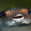 Happy Fish by Alynne Landers