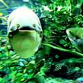 Happy Fish by Ed Weidman