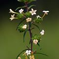 Happy Flowers by Ben Upham III