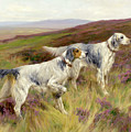 Happy Four Paws English Setters by Isabella Howard