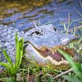 Happy Gator by Judy Kay