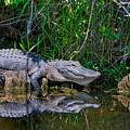 Happy Gator by William Wetmore