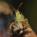 Happy Grasshopper On Cattail by Barbara Treaster