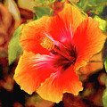 Happy Hibiscus by Patricia Montgomery