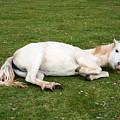 Happy Horse by Roy Pedersen