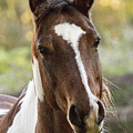 Happy Horse by Suanne Forster